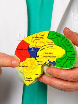 Brain injury main image
