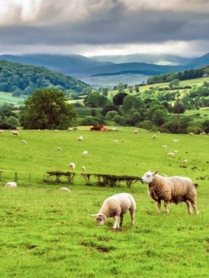 Farm Business Tenancy Or Grazing Licence B 2800229