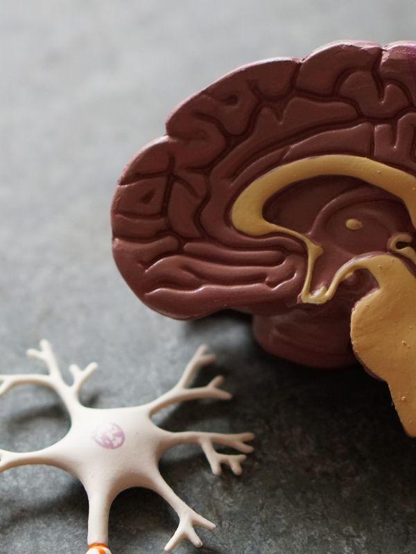 Brain Tumour JPEG