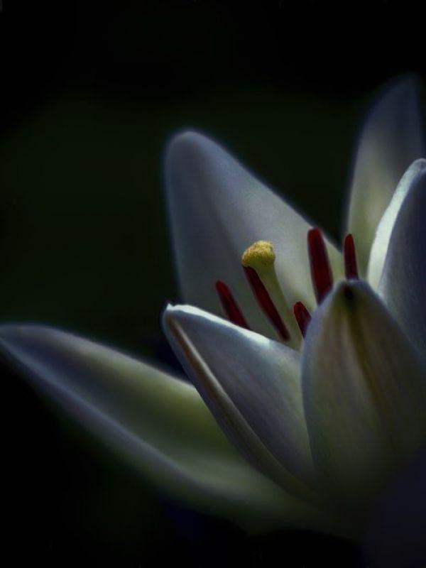 Flower3 JPEG