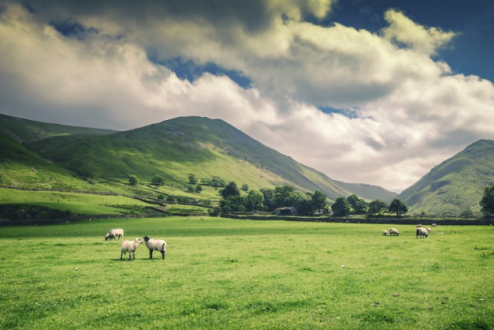 Cumbrian landowners: act now